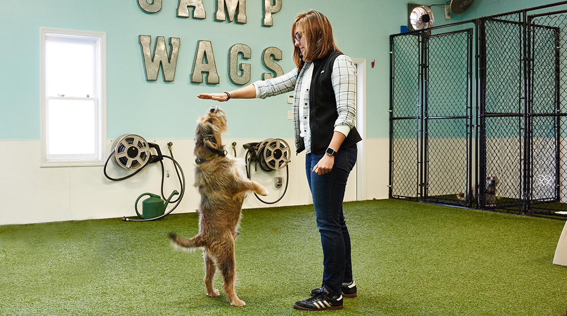 Wags 'n Whiskers | Services | Training_banner_img