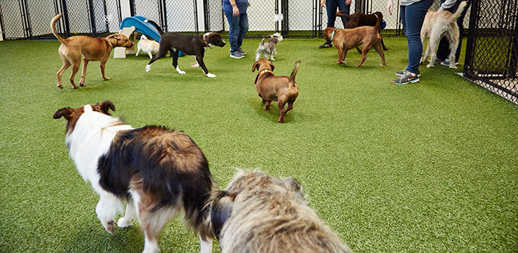 Wags 'n Whiskers, Birmingham's comprehensive pet care facility, has an indoor, climate-controlled, canine grass play area.