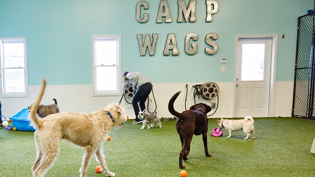 Wags 'n Whiskers | Services | Daycare_banner_img