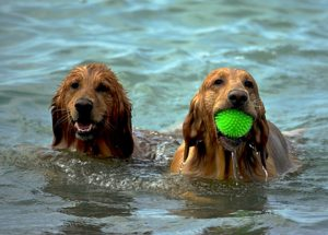 Tips for playing with your dog this summer
